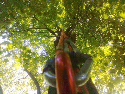 Baumpflege2